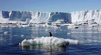 Pingvinai Antarktidoje susiduria su klimato kaita