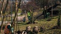 Vilniuje – naujos žalios zonos: pasodinta beveik 500 medžių, vaismedžių sodas