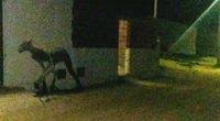 Keistas padaras gatvėje (nuotr. YouTube)