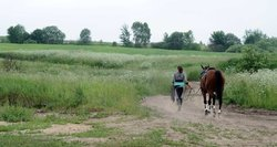 Po arklių vagysčių ir jų tiekimo į Lenkiją mėsai – negailestingas nuosprendis