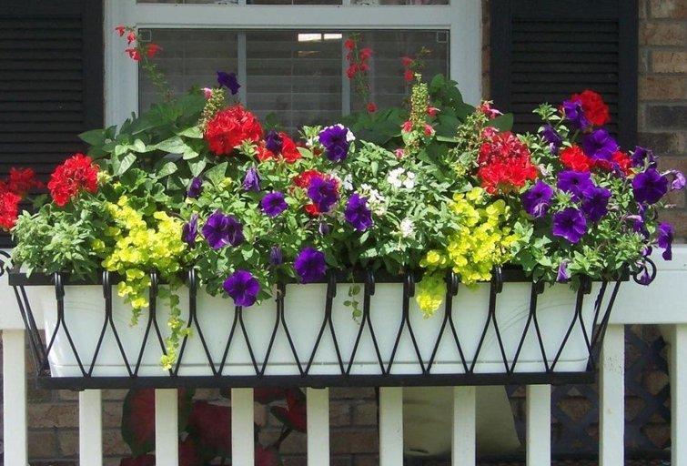 Atskleidė geriausias balkonų gėles: laikas jų sodinimui (Nuotr. valstietis.lt)