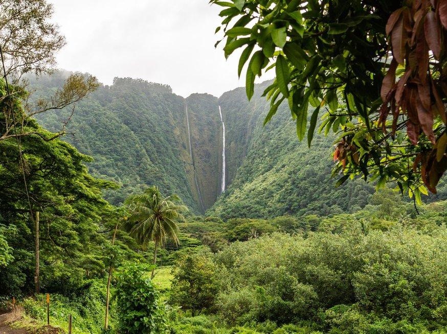 Poilsis Havajuose (nuotr. Unsplash)