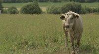 Atogrąžų karščiams nesitraukiant, atskleidė, kaip pasirūpinti gyvūnais: šiukštu nedarykite šios klaidos (nuotr. stop kadras)