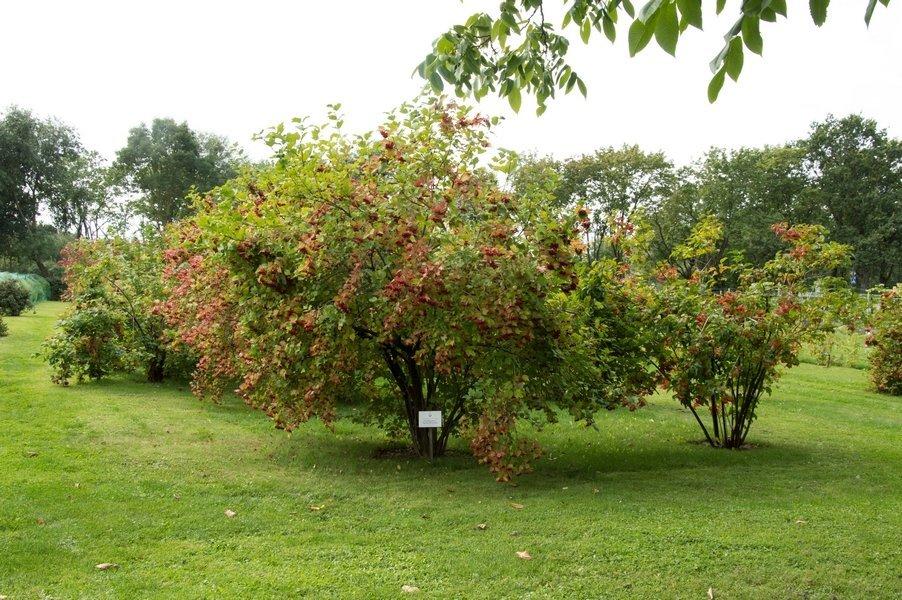 Putinų kolekcija VDU Botanikos sode