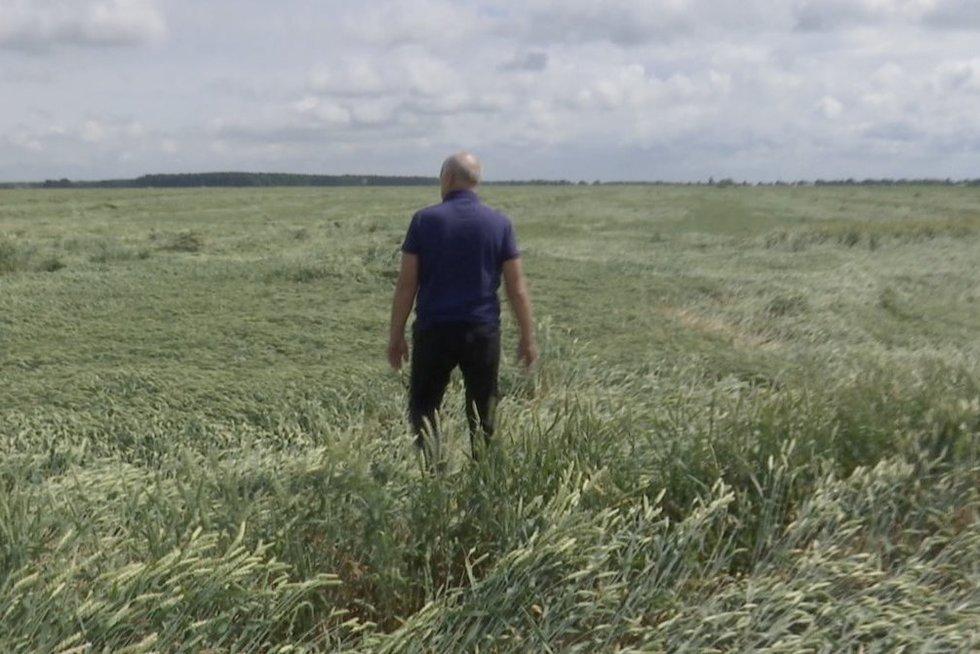 Ūkininkai skaičiuoja 90 procentų derliaus praradimo: viskas dėl liūčių (nuotr. stop kadras)