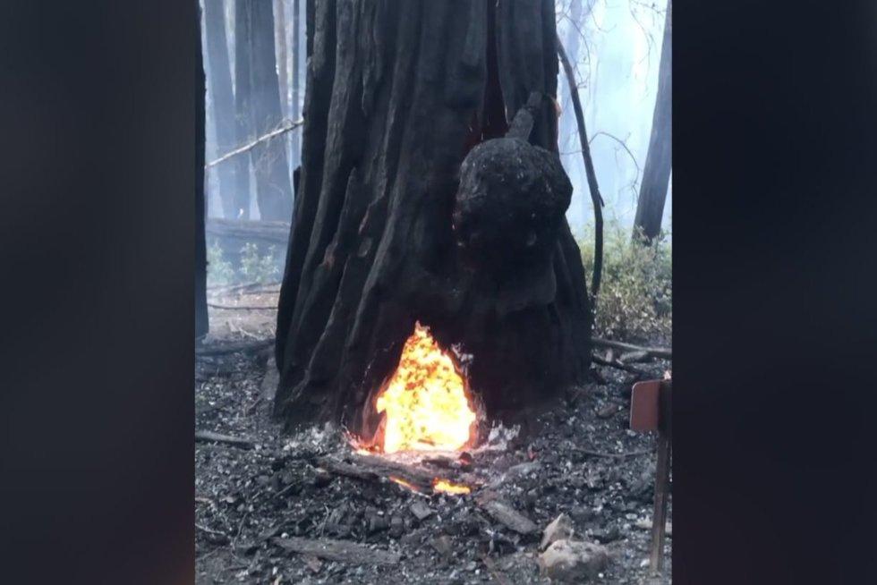 Miške pamatytas vaizdas sukaustė dėmesį – veiksmų teko imtis žaibiškai (nuotr. stop kadras)