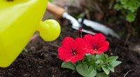 Pasėkite šias gėles jau dabar: apdovanos ankstyvais žiedais (nuotr. Shutterstock.com)