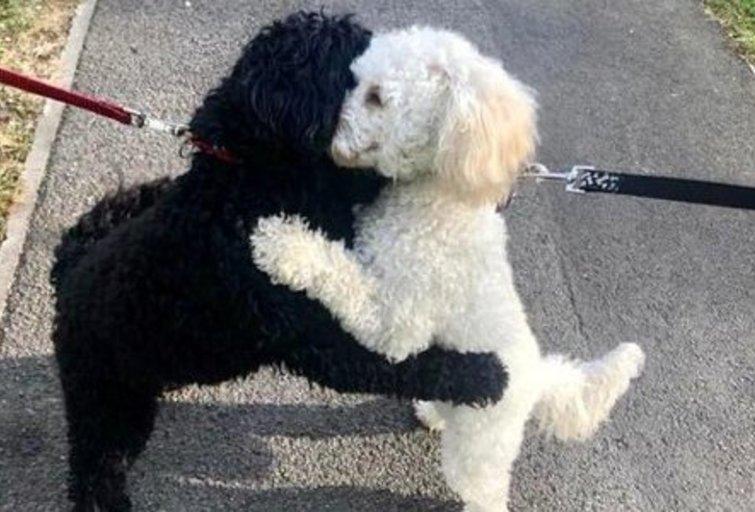 Šunų nuotrauka internete susilaukė gausybės reakcijų (nuotr. Twitter)