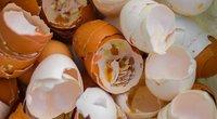Kiaušinių lukštai (nuotr. Shutterstock.com)