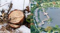 Vilniaus savivaldybės užmojis – kurs japonišką sodą, tačiau iš pradžių išpjaus 450 medžių
