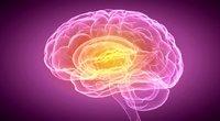 Smegenys (nuotr. 123rf.com)