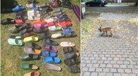 Įspūdinga batų lapės kolekcija (nuotr. Twitter)