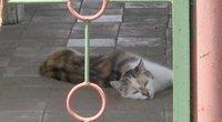 Karas dėl kačių Kėdainiuose: gyventojai grasina jas išnuodyti (nuotr. stop kadras)