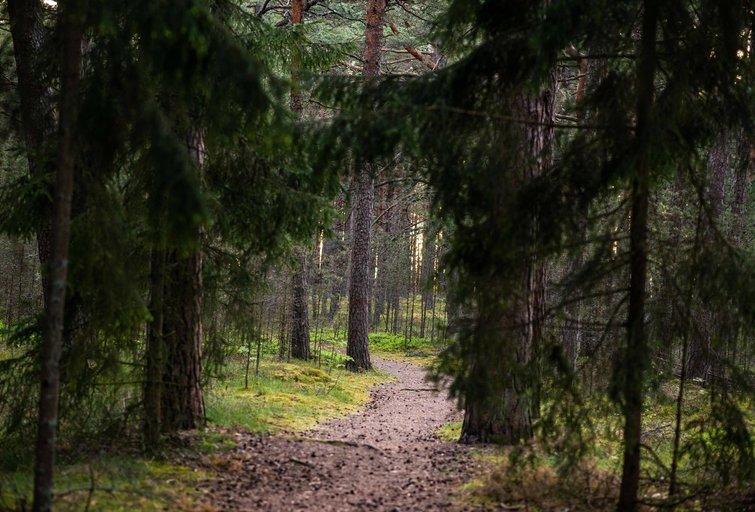 Miškas (nuotr. Fotodiena/Justino Auškelio)