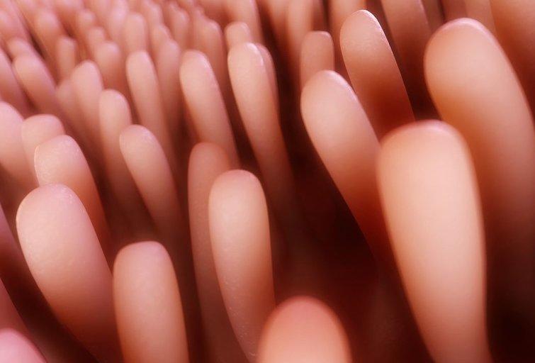Parazitai (nuotr. 123rf.com)
