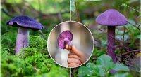 Violetinis nuosėdis (tv3.lt fotomontažas)