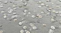 Pamatę, kas dedasi paplūdimyje, negalėjo patikėti savo akimis: smėlyje jų buvo tūkstančiai (nuotr. stop kadras)