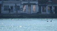 Viename Venecijos kanalų pasirodė du delfinai (nuotr. stop kadras)