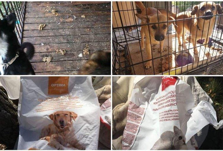 Gyvūnų prieglaudoje tragiška situacija: nevalytuose narvuose alkani ir neprižiūrėti beglobiai (nuotr. facebook.com)