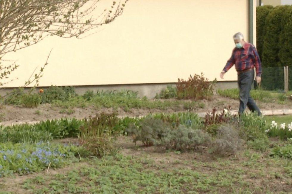 Sodininkai nebežino, ką daryti: neatsigina gausaus kenkėjų antplūdžio (nuotr. stop kadras)