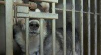 Prieglaudose gyvūnai nebetelpa: augintiniai tampa našta, o norinčių priglausti – vienetai (nuotr. stop kadras)