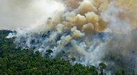 Amazonės miškas (nuotr. SCANPIX)