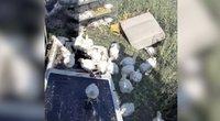 Policininkai po pievą gaudė viščiukus: apvirto juos gabenęs automobilis (nuotr. stop kadras)