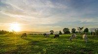 Ūkis (nuotr. Shutterstock.com)