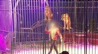 Atkirtis Prancūzijos siekiui uždrausti gyvūnus cirkuose: tai – neįmanoma (nuotr. stop kadras)