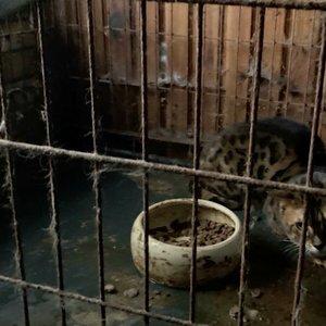 Marijampolėje – dar viena nelegali gyvūnų veisykla: papasakojo apie pasibaisėtinas sąlygas