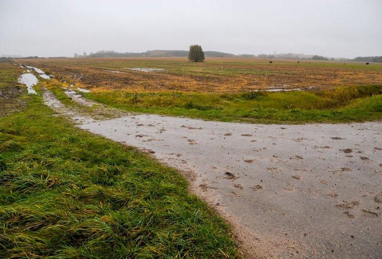 2017-ųjų ruduo ūkininkams pridarė nuostolių, tačiau kai kur derlius buvo spėtas nuimti. Radviliškio rajonas. (nuotr. Eimanto Genio)