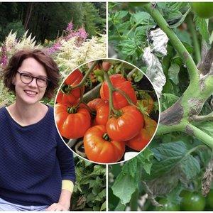 Atskleidė didžiausią pomidorų ligą: įsidėmėkite ir žinokite kitiems metams