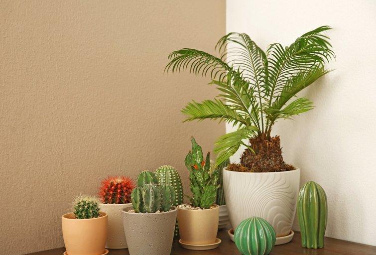 Augalai namuose  (nuotr. 123rf.com)