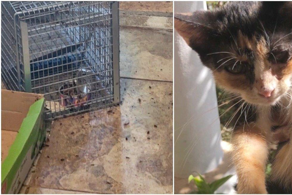 Pravėrę moters namų duris pareigūnai pakraupo: tokiomis sąlygomis buvo laikoma būrys kačių