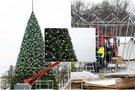 Sostinėje jau kyla Kalėdų eglė (nuotr. Fotodiena/Justino Auškelio)