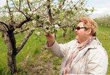 Lietuviški obuoliai taps prabanga?