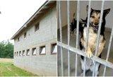 Buvusi gyvūnų prižiūrėtoja rėžė: prieglaudoje žudo eiliniai darbuotojai
