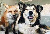 Nuotaikos užtaisas: lapė ir šuo – neišskiriami draugai