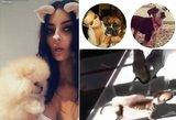 Susirūpinta Kardashianų augintiniais: sulysę, gaištantys ir naudojami kaip žaisliukai?