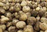 Kada pigs lietuviškos bulvės?
