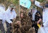 Į avariją pateko suknvežimis su bitėmis – kilo panika