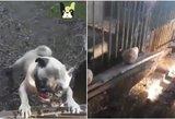 Slaptai nufilmavo šuniukų daugyklą Prienų rajone: sąlygos sukels šleikštulį