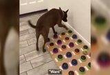 Šuo tapo sensacija – šeimininkui moka pasakyti žodžiais, ko nori