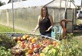 Pomidorų rojus Panevėžyje – Vilma parodė, ką užaugino dviejuose šiltnamiuose