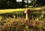 Neeilinis svečias skaitytojo sodyboje – pavasarį užfiksavo rudens grybą