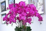 Rudenį orchidėjų žiedų pavydės visi: 1 triukas pavers jas tobulomis