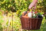 Rudens gėrybės – spalvingas kelias geresnės sveikatos link