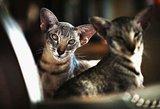 Dizainerio Liutauro Salasevičiaus mados namuose šeimininkauja katės