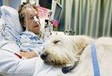 Nuostabi idėja: gyvūnai gali aplankyti sergančius šeimininkus
