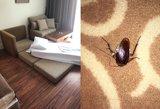 Lietuvius pribloškė nakvynė 5 žvaigždučių viešbutyje: miegas ant čiužinio ir tarakonai